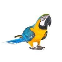 Barība putniem