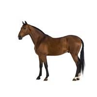 Papildbarība zirgiem