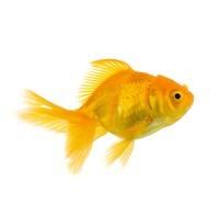 Barība zivtiņām