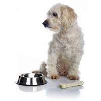 Profesionālā barība suņu senioriem