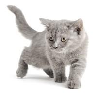 Kaķu veselībai